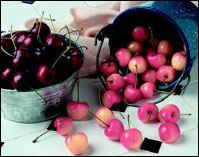 cherries in buckets
