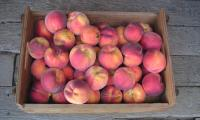 box_of_organic_peaches-700.jpg